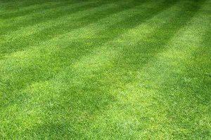 Posečený trávník