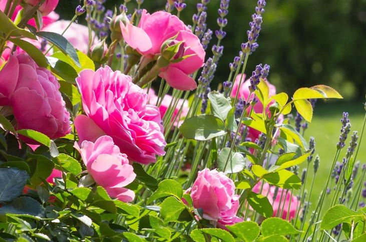 Červen v zahradě