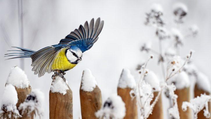 Zimní přikrmování zahradního ptactva