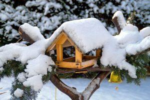 Krmítko v zimní zahradě