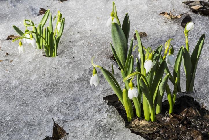 Únor v zahradě