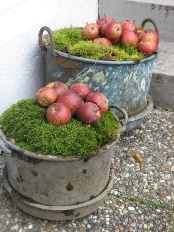 Jablka aranžovaná na mechu