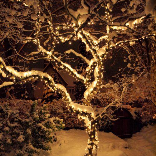 Zasněžený strom na zahradě